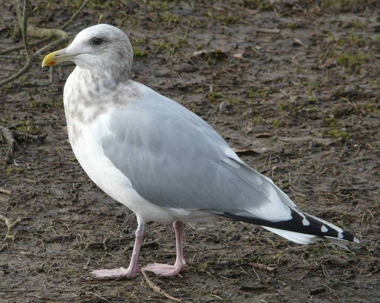 Individualism: All of these things are not like the others ... |Thayers Gull