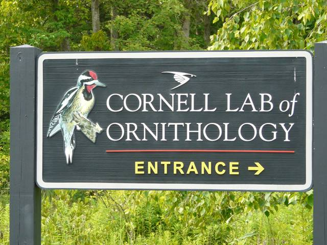 cornell sign