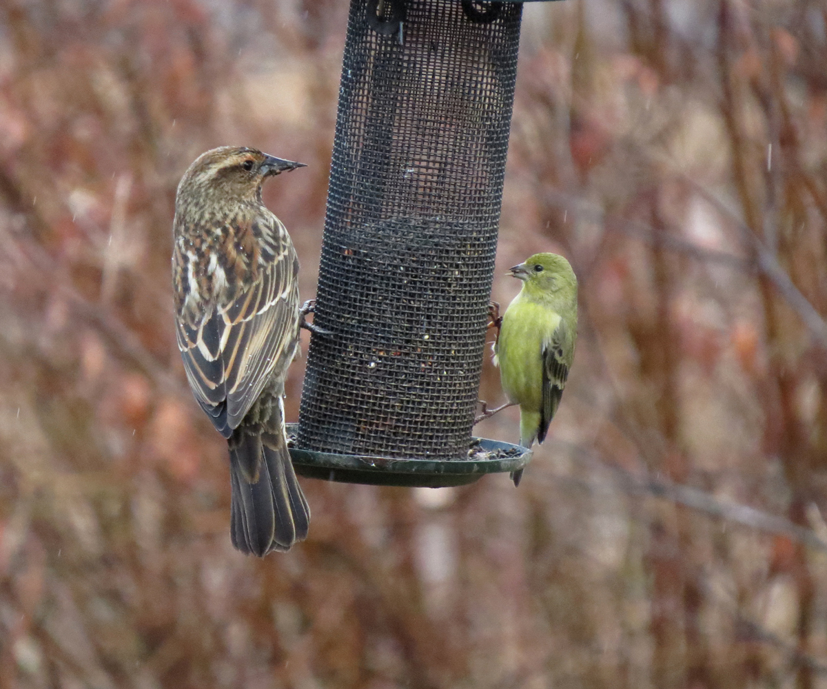 Diy Finch Bird House Plans Wooden Pdf Lathe Woodworking