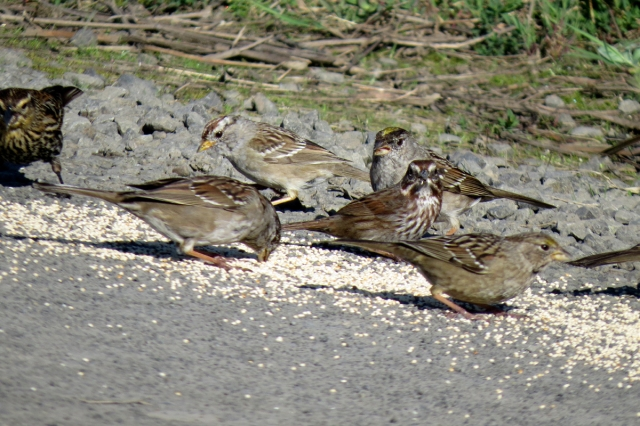 sparrow mix