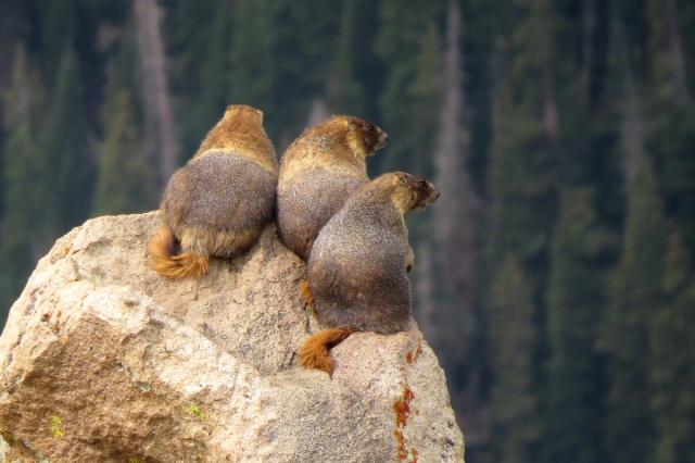 marmot trio 2