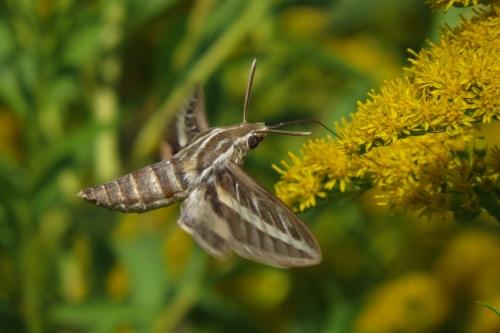 moth 4