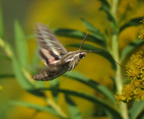 moth 5