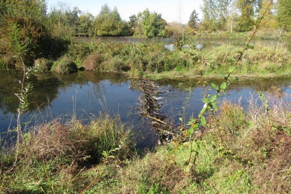 beaver dam low res