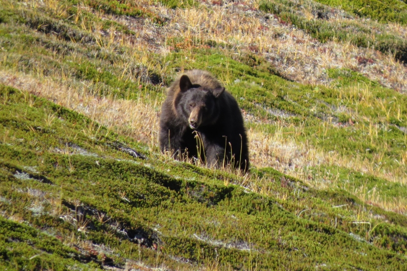 bear 1