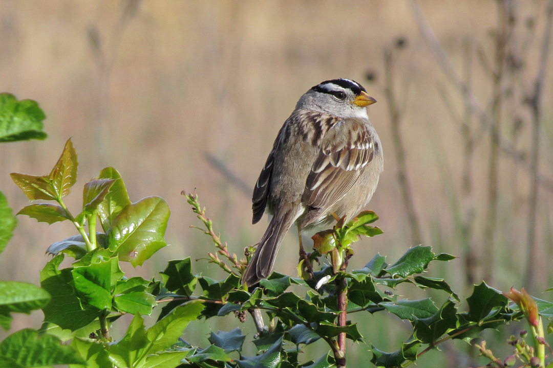 wt sparrow 2